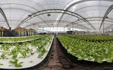 <b>甘肃省发布农业科技绿皮书 提出农业可持续发展的技术创新策略</b>