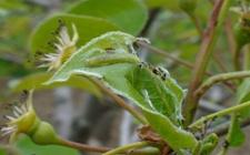 苹果树有哪些虫害?苹果树常见虫害的防治方法介绍