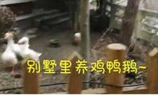 壕!土豪买别墅只为养鸡种菜打发时间!!