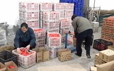 浙江大洋丰收5000吨椪柑无人问津 电商企业给予帮助解农户滞销难题