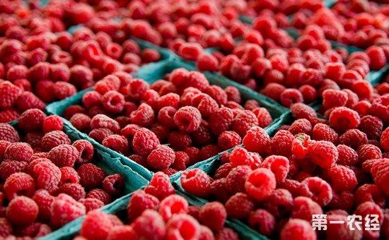 红树莓价格多少钱一斤?