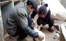 兔子要打疫苗吗?兔子疫苗接种大全