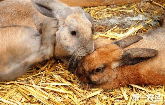 兔病毒性出血症