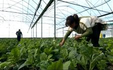 福建发展特色现代农业 促进蔬菜产业提档升级