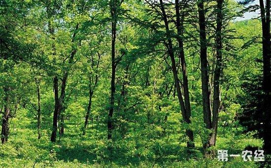 安徽滁州:着力发展七大林业产业  实现经济效益和生态效益双赢
