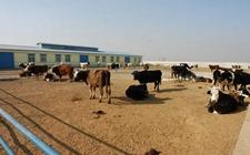 辽宁:2017年畜牧业产值排全国第七位 持续推进畜牧业转型发展