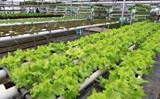 <b>甘肃:建设现代农业科技支撑体系 积极探索农业绿色发展道路</b>