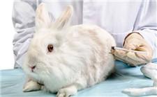 怎么给兔子用药?给兔子用药的方法