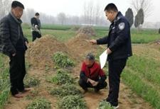 种罂粟当野菜卖 河南两农妇被刑拘