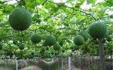 广西资源:扶持特色产业 培育规模种养能手