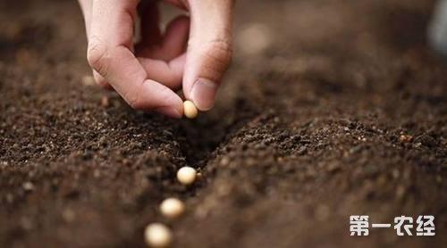 围绕乡村振兴战略实施 奋力推进现代种业发展