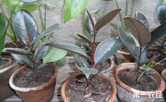 8种常见盆栽植物的扦插方法介绍!掐个枝条就能活