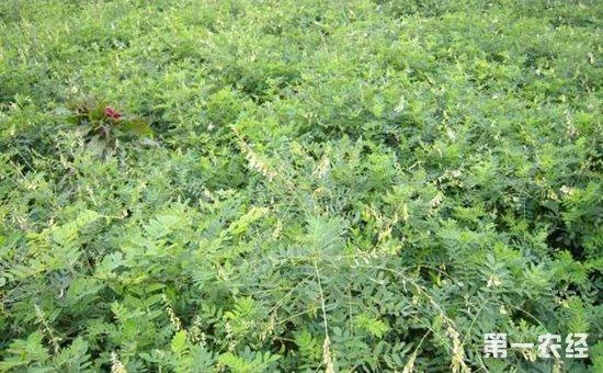 青海:中藏药材种植基地建设提速  林业供给侧改革成效显现