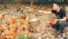澄迈小伙回家养鸡 家乡味走发家路