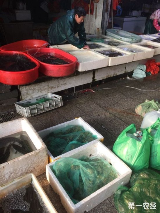 浙江金华新农贸市场卖青蛙? 工作人员:人工养殖非野生动物