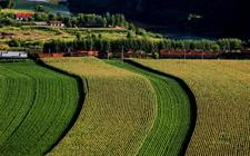 向农业强国转身:走质量兴农的乡村振兴之路