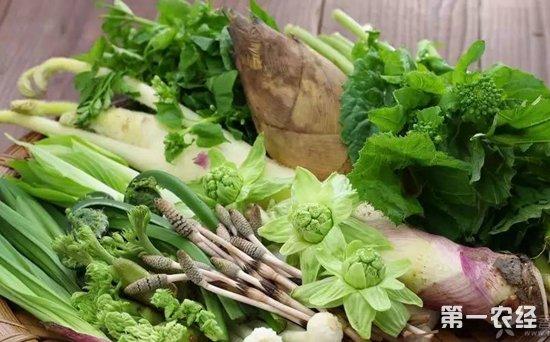 新鲜时令蔬菜大量上市 全国蔬菜处于下行通道