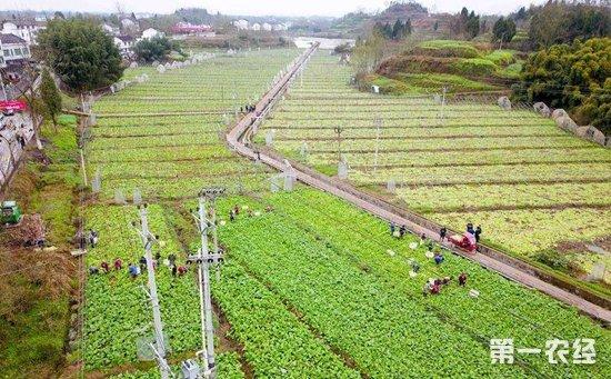 """2018年农网改造再投405亿  """"三区三州""""农网改造升级正式启动"""