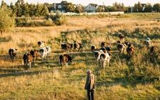 白俄罗斯拟扩大对华出口农产品 继牛奶牛肉将出口鸡肉给中国