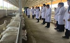 陕西渭南市加大招商引资力度 畜牧业重点项目投资或超16亿