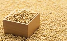 美国对华进口商品大规模征收关税引发美国大豆协会担忧