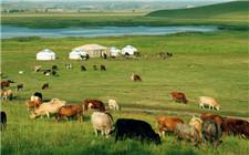 """内蒙古启动""""三年行动计划""""提升农畜产品安全品质"""