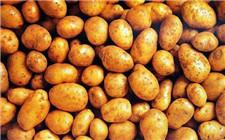 陕西铜川:因地制宜 土豆也能种出明天