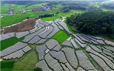 重庆:脱贫要持久 防止脱贫又返贫