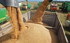 俄罗斯粮食出口突破3800万吨 畜产品出口商允许进入9个国家市场