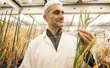 <b>美国农业部表示不会监管新技术育种农作物</b>