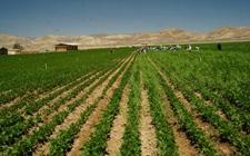 因大豆种植收益改善美国大豆种植面积可能超过玉米