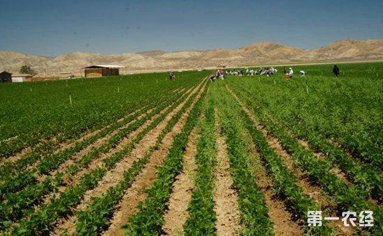 大豆种植面积