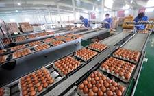 蛋鸡养殖业:起死回生还是回天乏术?
