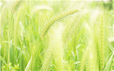 农科院开培训会 科技带动小麦绿色增产