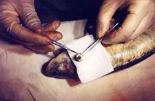鱼眼珠掉了会死吗?鱼眼珠子掉了怎么治?