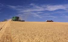 美国:2018年所有小麦播种面积将提高至4733.9万英亩