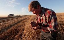 <b>俄罗斯不需要小麦出口关税 可能完全取消该税或维持零税率</b>