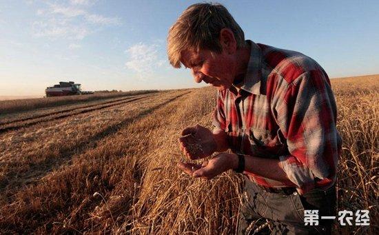 俄罗斯不需要小麦出口关税  可能完全取消该税或维持零税率