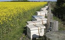 陕西凤县:扶持中蜂产业发展 对贫困户建档立卡给予补助