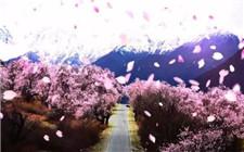 西藏桃花节吸引游客 带动多产业发展