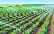 新疆:高效节水灌溉带动农村产业变革