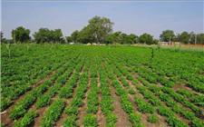 农业农村部:全国主要农作物春季施肥指导