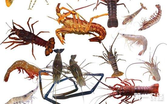 山东威海:水产品价格涨跌互现 螃蟹爬虾货紧价高