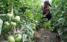 河北邯郸:春耕正当时 开展农耕蔬菜种植
