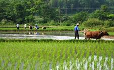 江苏:大力推进春播生产 2018农业生产开局良好