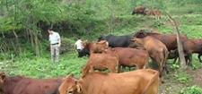 <b>农民冬闲养牛,配套措施额外收入赚钱有门道</b>