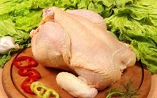 """禽产业链系列研究之""""鸡肉消费3大问"""""""