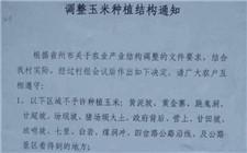 贵州种玉米将被罚?村委会为何如此做
