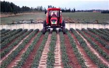 新疆巴楚:土地流转助力机械化生产