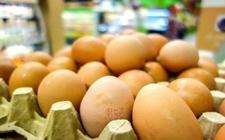 瑞士人竟然这样吃鸡蛋:2017年瑞士消费鸡蛋共15亿只!